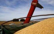 La comercialización de granos creció un 59% y ocupará a 35 mil trabajadores