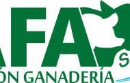 Por sexto año consecutivo AFA SCL será la consignataria oficial