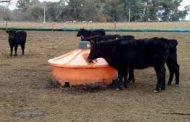 La ganadería eje estratégico