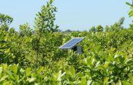 SE evalúa el funcionamiento de una trampa con energía solar  para el control natural del rulo de la yerba mate