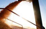 Nueva modalidad para la liquidación de contratos de granos en dólares