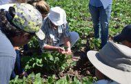 Un trabajo en red que eleva la vara de la agricultura