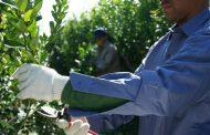 Capacitación a cosecheros en Tres Capones