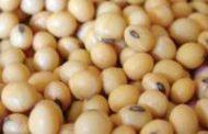 Creció 6,5% la exportación del complejo sojero argentino