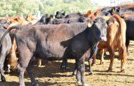 Destacan recuperación de stock bovino y crecimiento de las exportaciones en la Provincia
