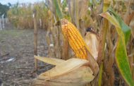 Se presentó tecnologías para soja y maíz, y estrategias de manejo para el norte argentino