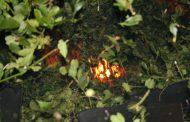 Se decomisó yerba mate canchada en un secadero clausurado de la Zona Centro