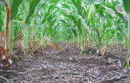 ¿Cuánto nos cuestan las malezas en los diferentes cultivos?