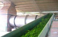 Se pone en marcha un programa para optimizar el uso de energía térmica en secaderos