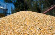 Récord de exportaciones de maíz: 24,9 millones de toneladas