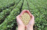En vísperas de la siembra de soja, BASF resalta la importancia de sembrar semillas de calidad