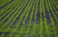El Ministerio presentó la Prospectiva Agrícola 2030