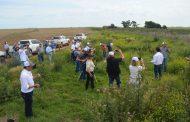 Conceptualizar la biodiversidad como un insumo agrícola.