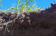 El nuevo paradigma de fertilidad de suelos