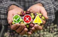 Las hortalizas mostraron un crecimiento debido a cambios de hábito de consumo en cuarentena