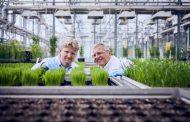 sSe lanzó el herbicida Luximo® con un nuevo modo de acción