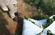 Entrega kits sanitarios para tareferos