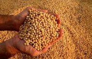 La cosecha de semilla finalizó con éxito a pesar de la pandemia