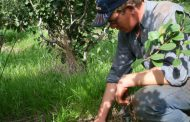 """""""Cuidar el suelo, es cuidar la planta, las hojas de yerba mate"""""""