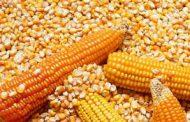 Córdoba, Santa Fe y Entre Ríos  quieren sacarle aún más jugo al maíz