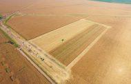 Tecnologías para ganarle 5 toneladas por hectárea al maíz