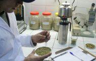 Se emitirá un certificado para preservar la calidad de la yerba mate