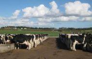 RUMET presentó, un suplemento nutricional que aumenta hasta un 10% la producción de leche.