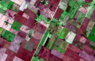 Con satélites, predicen cuánto alimento habrá para la producción animal