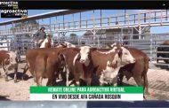 Se vendió toda la hacienda en el remate de gordos de AgroActiva Virtual