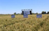 Bioceres recibe la aprobación regulatoria del trigo HB4® en Argentina