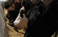 Impulsan la construcción de indicadores de sustentabilidad de la carne argentina