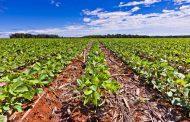 BASF se compromete con metas a diez años para impulsar una agricultura sustentable