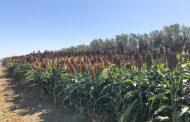 Claves para aumentar los márgenes de los planteos agrícola-ganaderos
