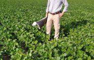 Aplicaciones oportunas para que los cultivos no sufran una pandemia