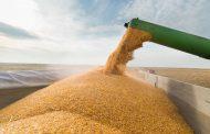 Posición institucional ante el cierre temporal de exportaciones de maíz