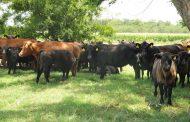 Los frigoríficos recibieron el 72% del cupo de exportación de carne argentina a Colombia