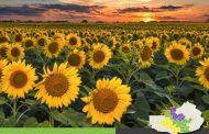 RAQ | Avance de Cultivos de Gruesa | 2º Reporte de Enero