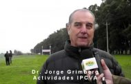 Carne vacuna argentina: estrategias para crecer en el mercado de EE.UU.