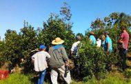Cómo lograr una buena cosecha, tema entre productores y técnicos en San Pedro