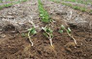Soluciones vivas para la agricultura