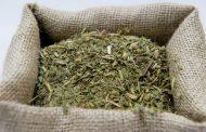 La Argentina logró la apertura del mercado de yerba mate a India