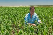 Potenciando los rendimientos en el cultivo de Poroto  desde la Nutrición del Cultivo