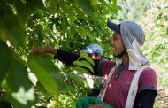 El RENATRE solicitó la inclusión prioritaria de los trabajadores rurales mayores de 60