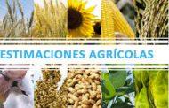 Agricultura lanzó la Estimación de campaña de la cosecha gruesa 2020/21
