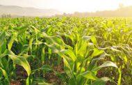 Alimentación en la Argentina, ¿Podemos comer mejor y a la vez cuidar el ambiente?