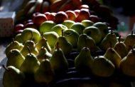 Qué impacto tienen las economías regionales en las agroexportaciones