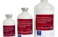 Una vacuna contra una de las enfermedades más presentes en las granjas porcinas