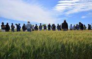 Nidera Semillas lanzó su campaña de trigo 2021