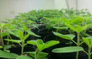 Con partículas 'invisibles' potencian tecnologías del agro