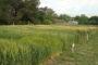 Cultivos de servicio: Una estrategia sustentable para mejorar el estado y la protección del suelo